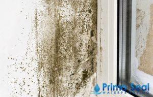 Moulds-and-Algae-Prima-Seal-Waterproofing-Singapore_wm